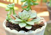 Grow It {garden inspiration}