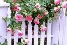 Vintage Roses / by Vicki Baker