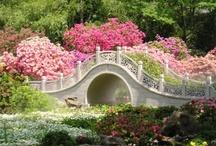 Cottage Garden / by Vicki Baker