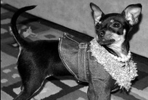Vintage Dog Photos / Great old pics of our favorite thing...DOGS, esp Chihuahuas / by Little Mingo