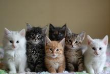 ♥ Love cats / kittens