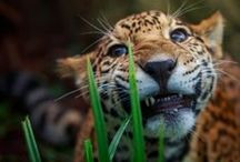 "The future is wild. / Wild animals. Zoo animals are in ""Domestics."""