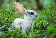 Hoppity Hop. / Bunnies, things for bunnies, and bunny themed things. / by Sarah Beaupre