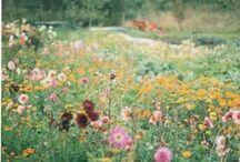 Flora. / Artsy flower photos. I like little flowers.