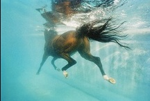 Equine. / Beautiful horse photos. Expect to see lots of Icelandic horses. / by Sarah Beaupre