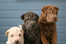 Pup Pups  / by Donna D