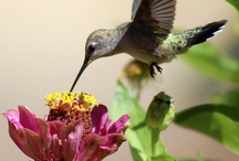 Hummingbirds / by Donna D