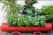 Container Gardens / Cool containers for stylish container gardens. / by Urban Gardens