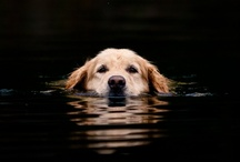 Dogs / by Bob Warfield