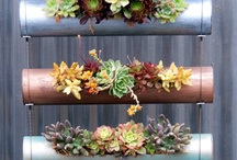 Cylinder Vertical Garden Offer! / Fiori Cylinders are for small spaces w/ option to grow vertically or on a tabletop! Can be grouped together into a vertical screen, hung on the wall individually or in clusters, or placed on a tabletop. Finished in a choice of five stylish metallic colors, they have a drain cap at each end and small rubber legs to steady them. Great for succulents!