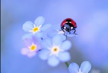 CKR Finds / Ladybugs / by Lesli Smidt Asay