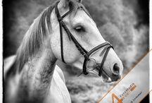 Horses & Shooting-Ideas / www.pferdefotografie-michael-sommer.de