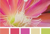 Love a Splash of Color / Collection of Color Palettes ... home, crafts, style... I want to dream in color!