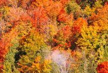 Forest in autumn / 日本の紅葉も素敵ですが、今年は海外の紅葉を観に行ってみませんか?