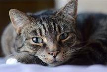 cat, koteczek, gatto / Where the crazy cat lady resides.