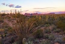 Arizona / Restaurants, tours, sights, accommodation, and experiences in the state of Arizona.