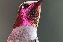 Birdy  / Fiet Fieuw.