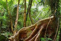 沖縄 西表島--Iriomote Okinawa-- / 『神秘の楽園』西表島。鬱蒼と生い茂るジャングルに囲まれた手つかずの自然が残る楽園。海も川も森も自然に囲まれて過ごす休日。