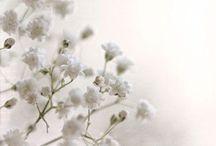 Flowers! / by June Steward