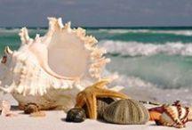 Special shells... conchinha especial!