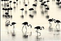 Black & White - Classic / Black & white photographic inspiration / by Lizzy Johnston
