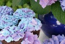 Yummo! Cupcakes
