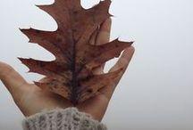 crunchy leaves / by Kelsey Kobasick