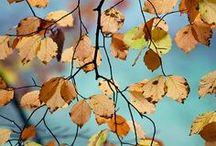 Fall bucket list / by Sarah Gott