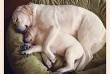 Peludos / Perros. Cães. Dogs.