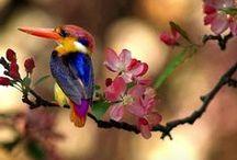 Nature's Splendor / by Jenn
