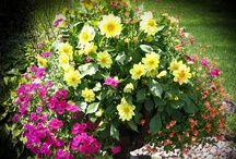 Containers for sun / A collection of containers created by Viola Nursery & Greenhouse, that will do best with more than 4 hours of sun each day. / by Viola Nursery and Greenhouse