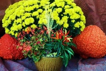 Planters with Fall color / Fall is a wonderful time of the year for container gardening. Colors are more vibrant and watering needs are usually reduced. This allows you to create new containers with low maintenance. / by Viola Nursery and Greenhouse