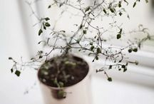 | blossom | green | / by Anette Nilsson