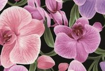 Orchids by Chong-a Hwang / by Timeless Treasures Fabrics