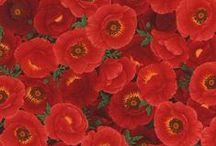 Poppy Grove / by Timeless Treasures Fabrics