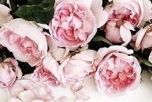 blooms & exteriors / by Sara Mueller