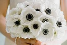 Black + White Color Palette / by anna and blue paperie