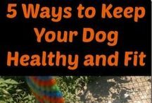 Pet Lovers / Informative posts on pet health, nutrition, care, fun and more from great bloggers. This is a group board. Bloggers can email callista83@cogeco.ca to contribute to the board. Any types of pets. All pins must lead to a post with information of use to pet owners/lovers.  #pets #dog #cat