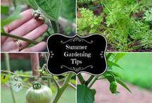 Gardening / Gardening tips and tricks