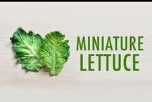 Minitaure Food Clay Tutorials / by BRIANA JOHNSON
