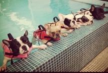 Bulldog Fever / by Anna Seixas