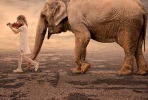 Loxodonto Africana / by Susan Francis Jones
