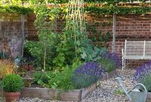 GARDEN | Growing Food / Inspiration and tips on how to grow my own vegetable garden, fruit, and herbs in my urban garden right in the middle of town | urban gardening | permaculture | edible landscaping