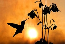 Silhouettes  / by Ellen Ford