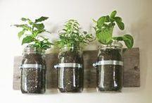 BRIGHT IDEAS / Natural Living | Kitchen Hacks | Frugal | DIY