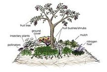 GARDEN | Permaculture Design / Permaculture design and techniques for my urban garden right in the middle of town | edible landscaping | growing food | organic gardening