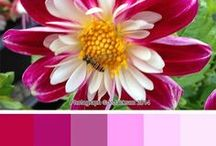 My Colour Palettes / I took a few photos of a few flowers in my garden and have decided to make colour palettes from them. The photos are obviously copyrighted to me but you may use the colour palettes to make your scrap kits etc for personal use or on kits that you give away as freebies.  Not to be used for any monetary gain All on my blog: http://www.jodesignz.blogspot.co.uk/