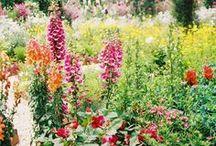 Dream Garden / by Tara