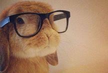 Cute Animals / by Ashley Harper