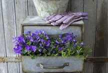 Get Dirty Girl / Gardening, flowers, tips, containers, garden decorations / by Zina Schneider